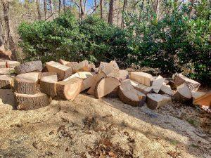 stump grinding Asheville